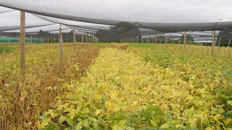 Protealis belooft 'eerste sojarassen voor lokale teelt' in 2022