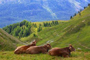 Pesticideban in Zwitserland gaat niet door: meerderheid stemt tegen