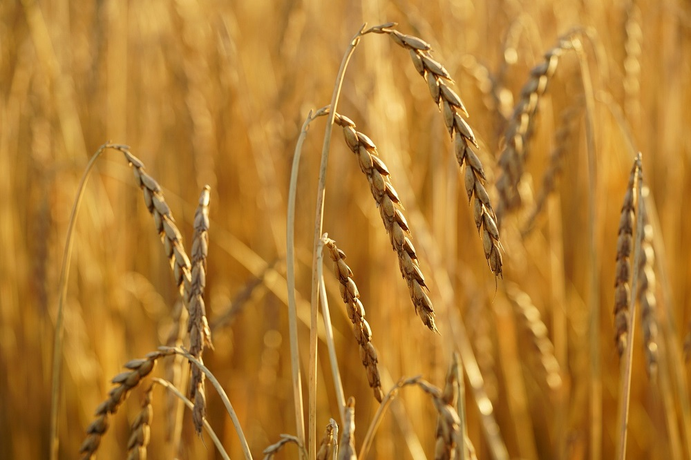 Kringlooplandbouw: kleinere kringloop niet altijd beter
